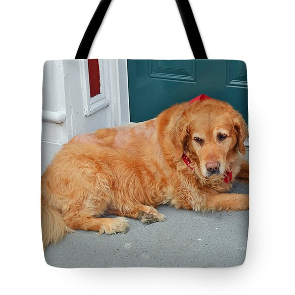 Dog In Waiting Tote Bag by Eva Kaufman