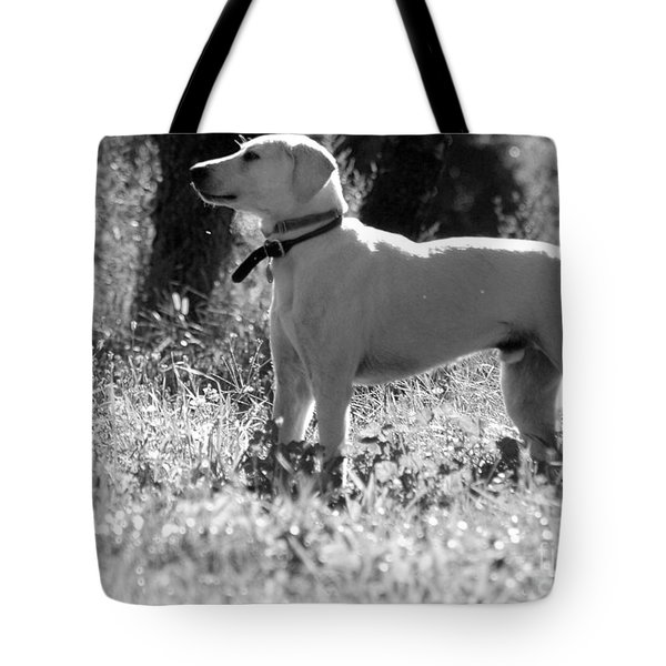 Dog On Guard Tote Bag by Kathleen Struckle