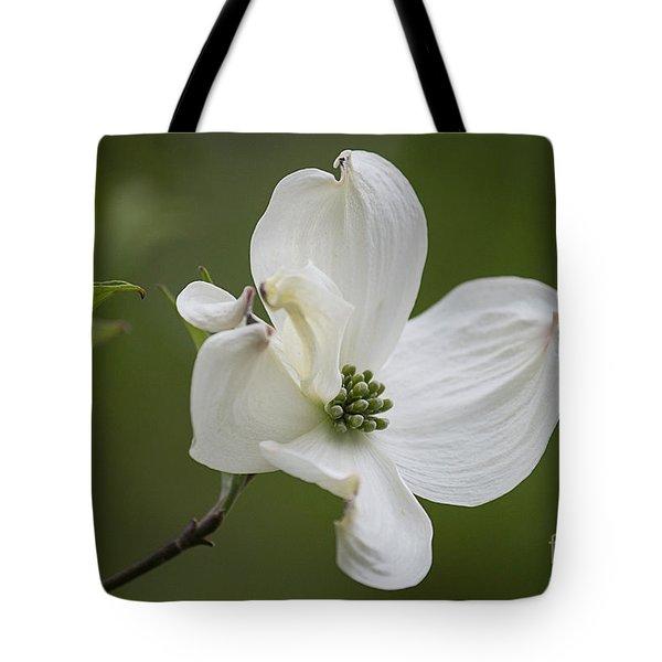 Dogwood Blossom Tote Bag by Arlene Carmel