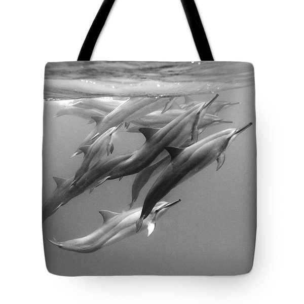 Dolphin Pod Tote Bag by Sean Davey