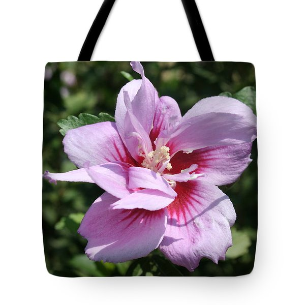 Double Headed Marsh Mallow Althaea Officinalis  Tote Bag by Tracey Harrington-Simpson