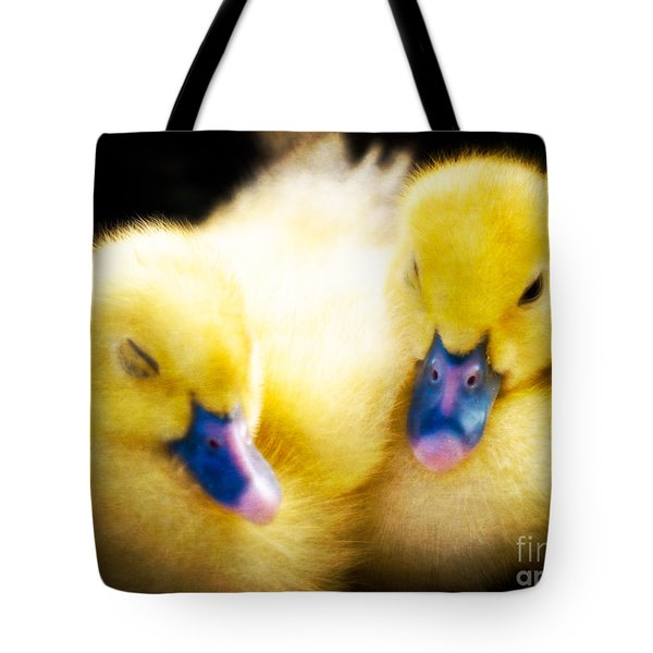 Downy Ducklings Tote Bag by Edward Fielding