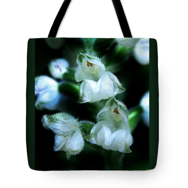 Tote Bag featuring the photograph Downy Rattlesnake Plantain Orchid by William Tanneberger