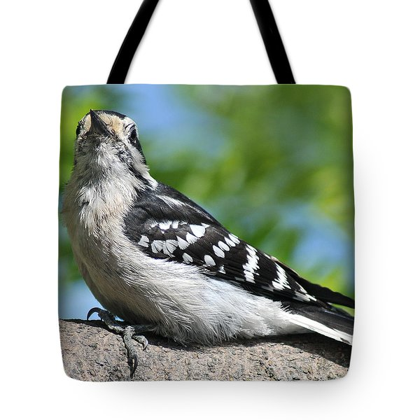 Downy Woodpecker 302 Tote Bag