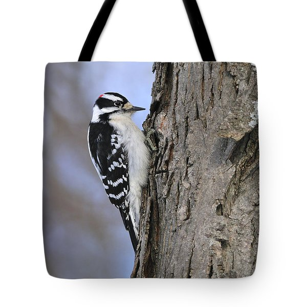 Downy Woodpecker Tote Bag by Tony Beck