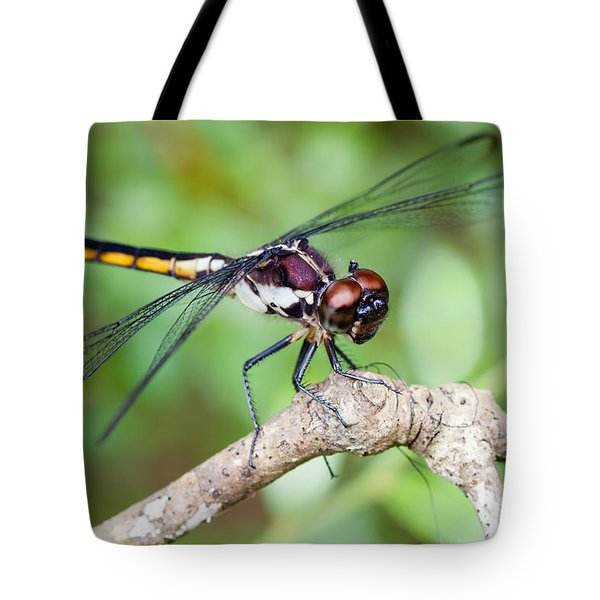 Dragonfly Tote Bag by Dawna  Moore Photography