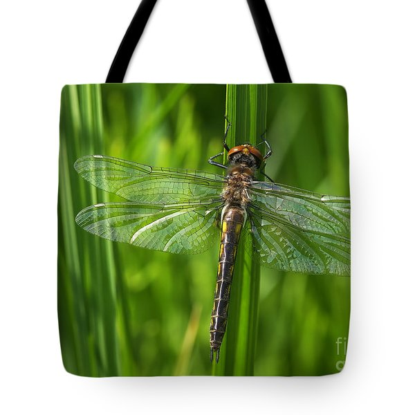 Dragonfly On Grass Tote Bag by Sharon Talson