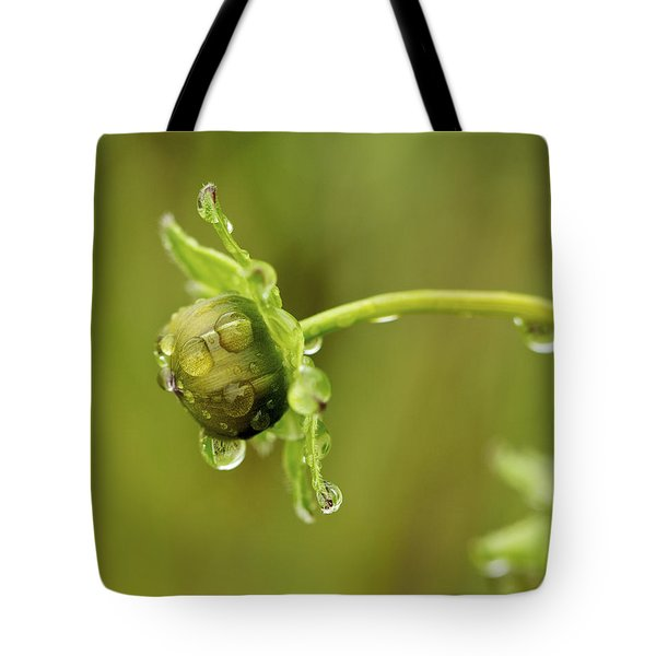 Drip Drip - Raindrops On Coreopsis  Tote Bag by Jane Eleanor Nicholas