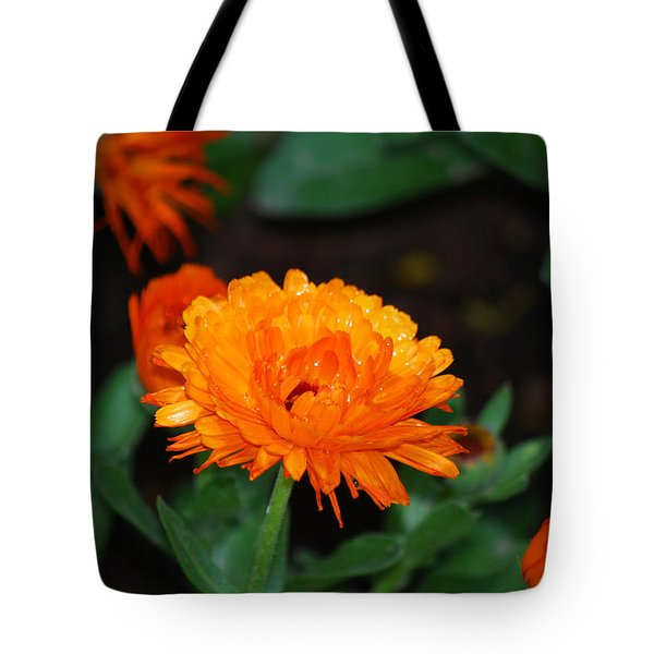 #youcannotwalkoffwithariverinabucket Tote Bag by Becky Furgason