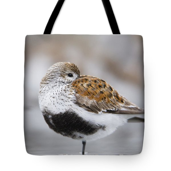 Dunlin Roosting With Western Sandpipers Tote Bag