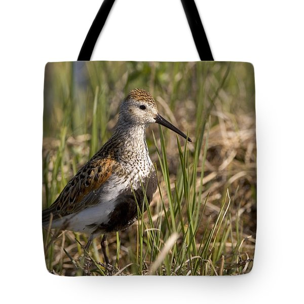 Dunlin Standing In Tall Sedge Grass On Tote Bag