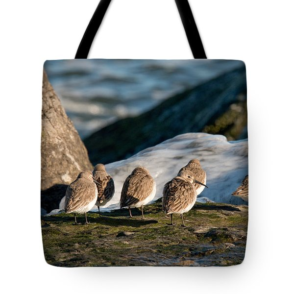 Dunlins On The Jetty Tote Bag