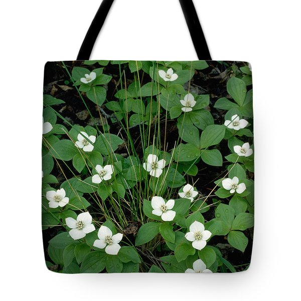 Tote Bag featuring the photograph Dwarf Dogwood by Doug Herr