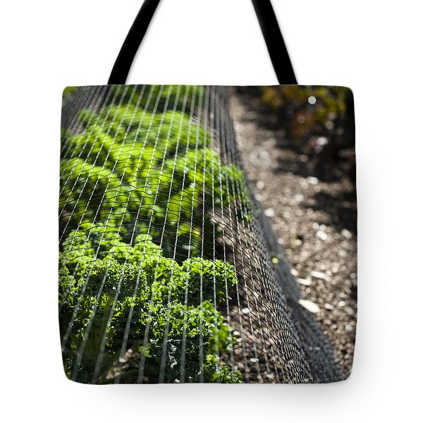 Dwarf Green Curled Tote Bag by Anne Gilbert