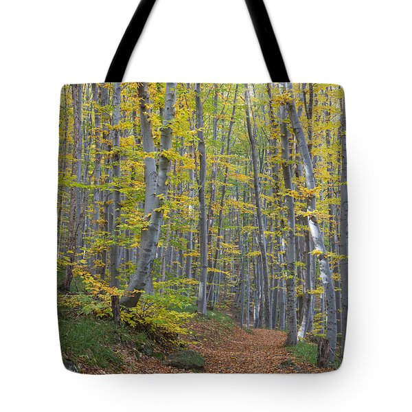 Tote Bag featuring the photograph Early Autumn Vitosha Mountain Forest Bulgaria by Jivko Nakev