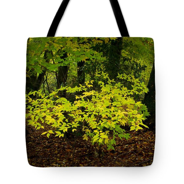 Early Fall In Bidwell Park Tote Bag