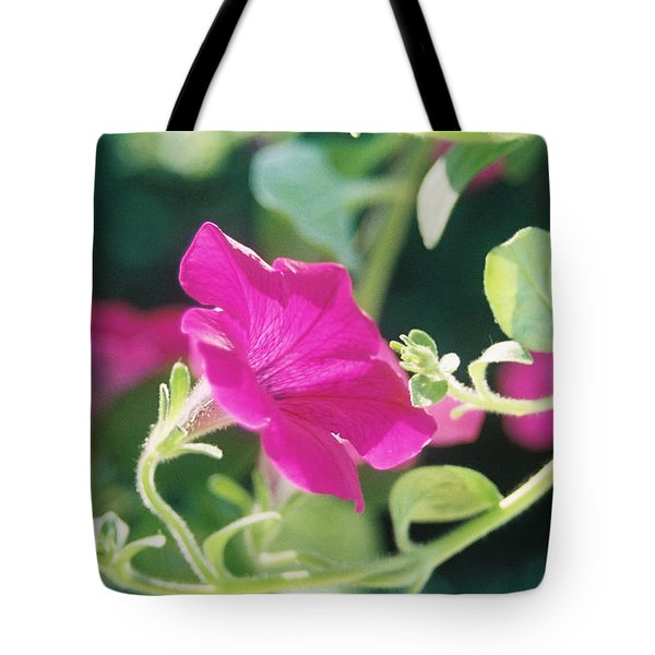 Tote Bag featuring the photograph Early Morning Petunias by Alan Lakin