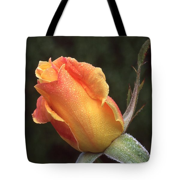 Early Morning Rosebud Tote Bag