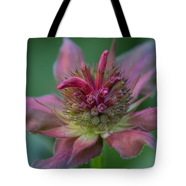 Early Spring Bee Balm Bud Tote Bag by Denyse Duhaime