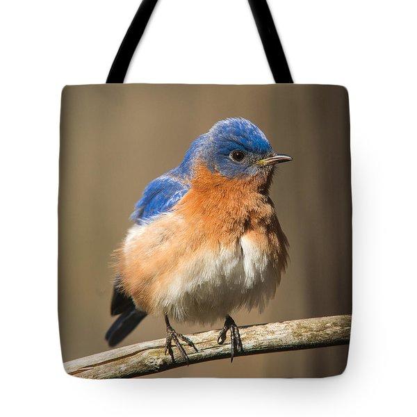 Eastern Bluebird Male Ruffled Tote Bag