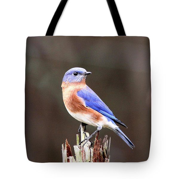 Eastern Bluebird - The Old Fence Post Tote Bag by Travis Truelove