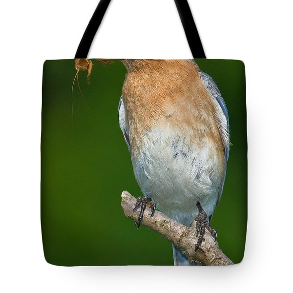 Tote Bag featuring the photograph Eastern Bluebird With Katydid by Jerry Fornarotto