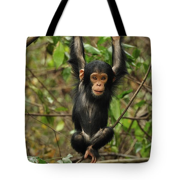 Eastern Chimpanzee Baby Hanging Tote Bag by Thomas Marent