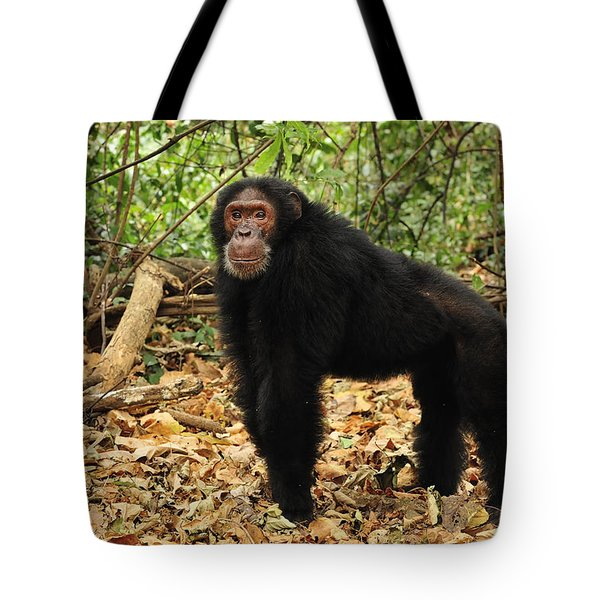 Eastern Chimpanzee Gombe Stream Np Tote Bag by Thomas Marent