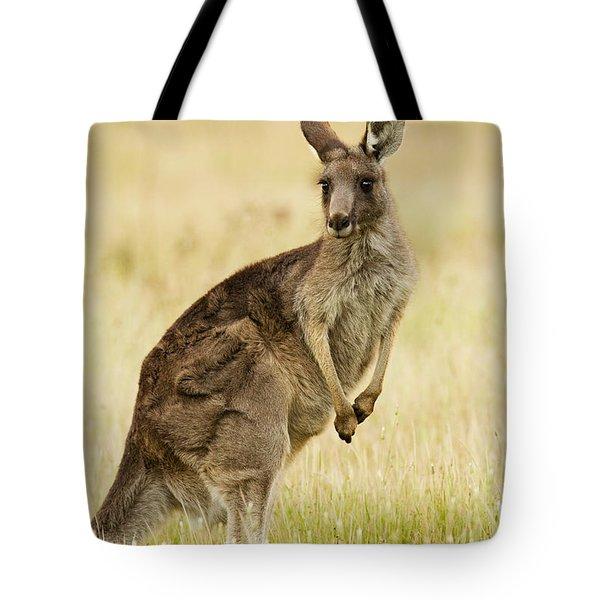 Eastern Grey Kangaroo Mount Taylor Tote Bag