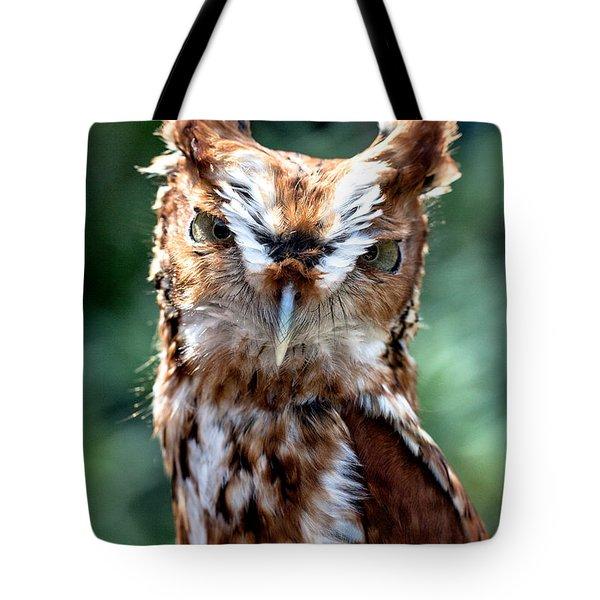 Tote Bag featuring the photograph Eastern Screech-owl by Bernd Laeschke