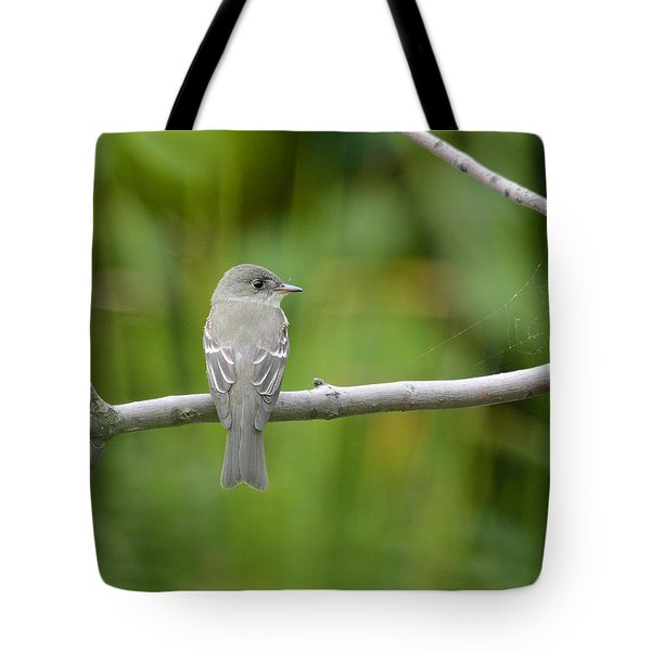 Eastern Wood Pewee Tote Bag