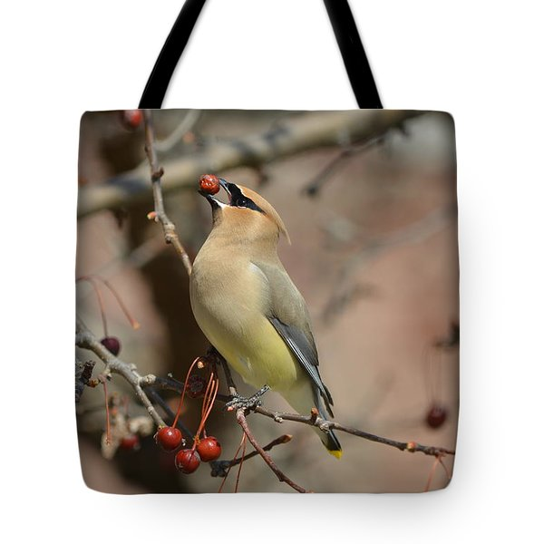 Cedar Waxwing In Winter Tote Bag