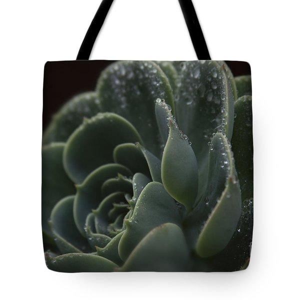 Echeveria Elegans X Lola - Crassulaceae Tote Bag by Sharon Mau