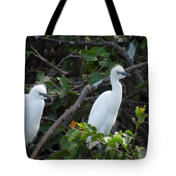 Egret Chicks Waiting To Be Fed Tote Bag by Ron Davidson