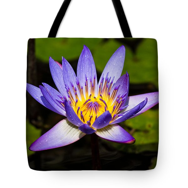 Egyptian Blue Water Lily  Tote Bag