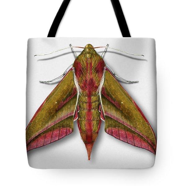 Elephant Hawk Moth Butterfly - Deilephila Elpenor Naturalistic Painting - Nettersheim Eifel Tote Bag