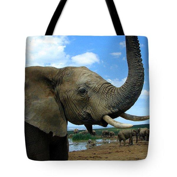 Elephant Posing Tote Bag