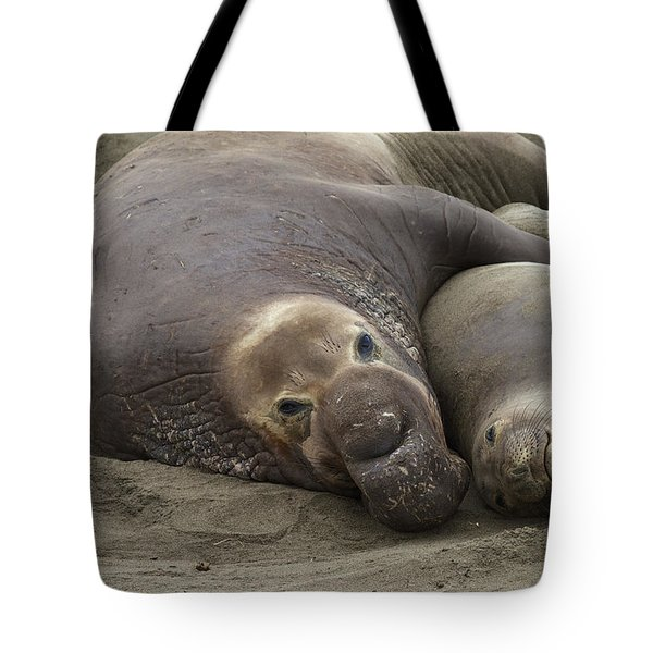 Elephant Seal Couple Tote Bag