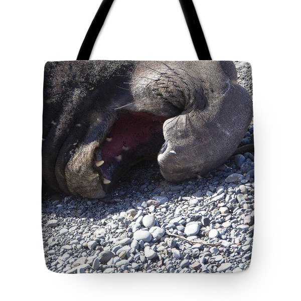 Elephant Seal Yawn Tote Bag by Rich Collins