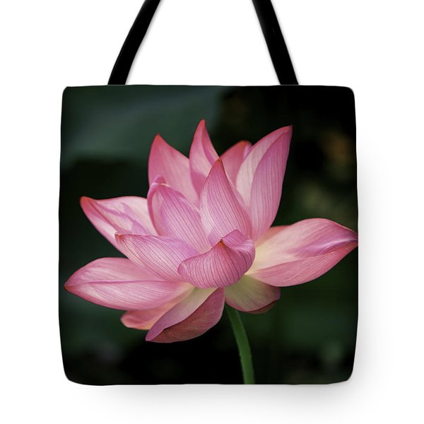 Tote Bag featuring the photograph Elizabeth by Cindy Lark Hartman