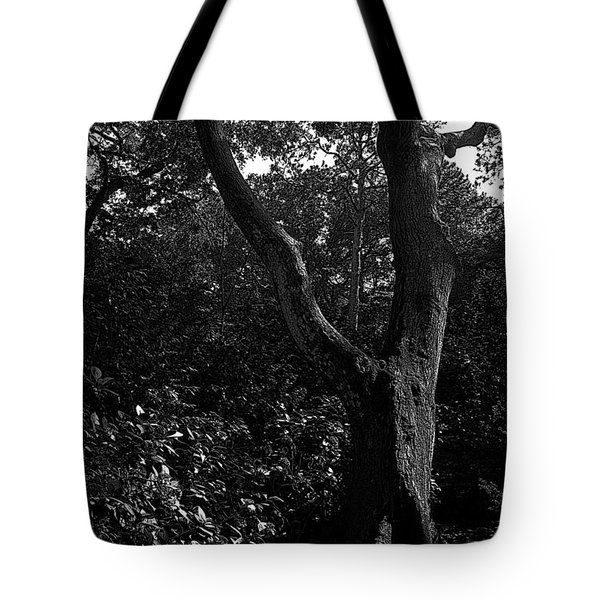 Tote Bag featuring the photograph Elizabethan Gardens Tree In B And W by Greg Reed