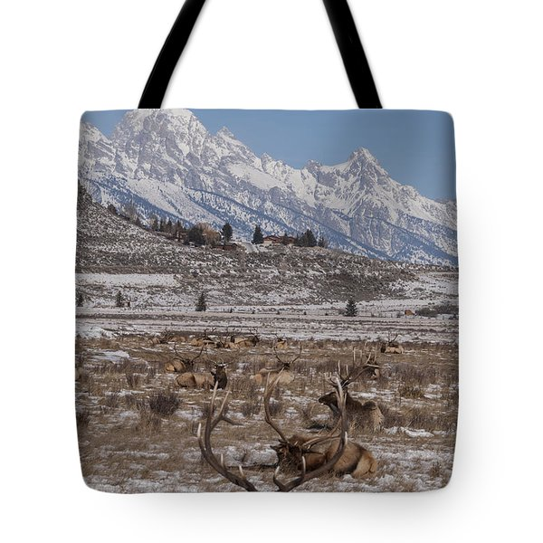 Elk And The Grand Tetons Tote Bag