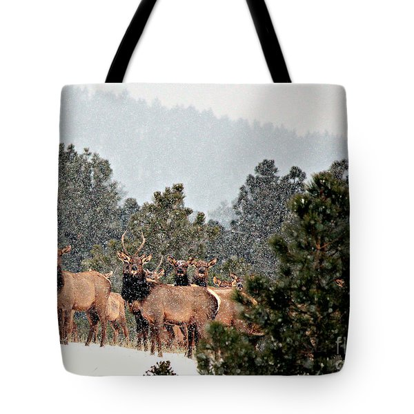 Tote Bag featuring the photograph Elk In The Snowing Open by Barbara Chichester