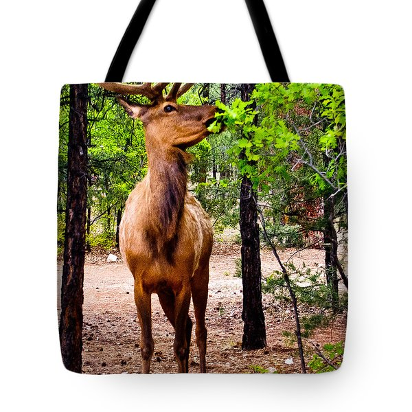 Tote Bag featuring the photograph Elk - Mather Grand Canyon by Bob and Nadine Johnston