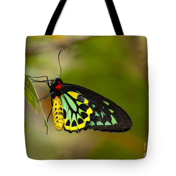 Emerald Beauty Tote Bag by Mike  Dawson