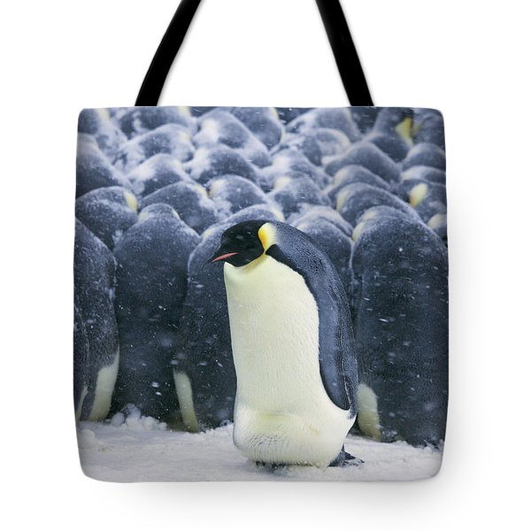 Emperor Penguin Trying To Get Tote Bag by Frederique Olivier