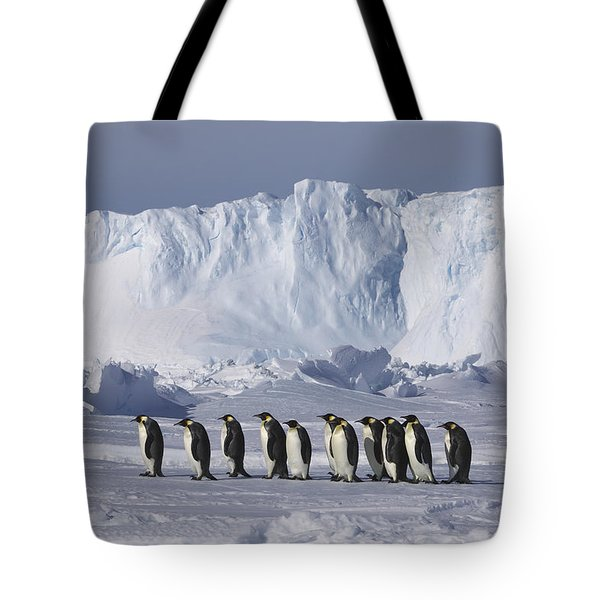 Emperor Penguins Walking Antarctica Tote Bag