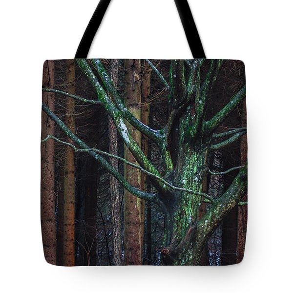 Tote Bag featuring the photograph Enchanted Forest by Davorin Mance