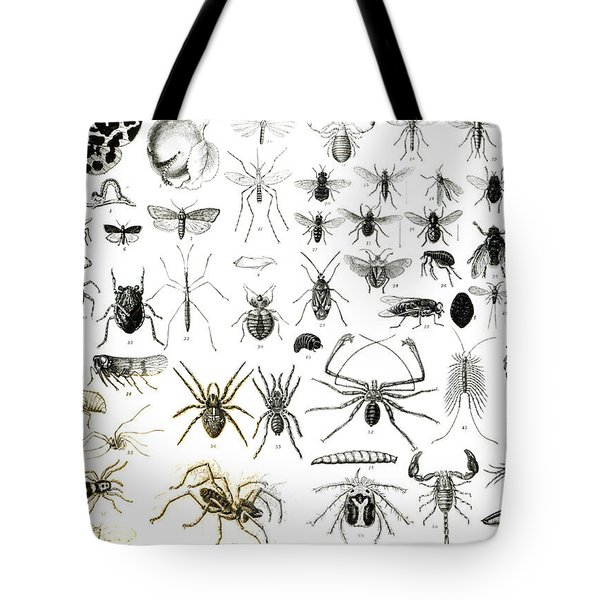 Entomology Myriapoda And Arachnida  Tote Bag by English School