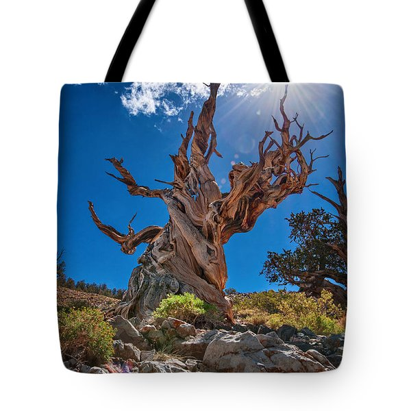 Eternity - Dramatic View Of The Ancient Bristlecone Pine Tree With Sun Burst. Tote Bag
